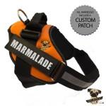 Rigadoo Dog Harness - Marmalade